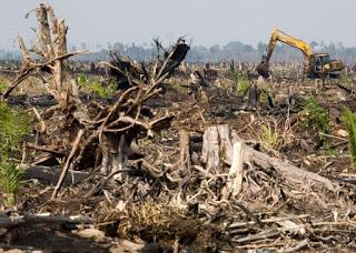 Kerusakan Sumber Daya Alam Hutan Akibat Pembakaran