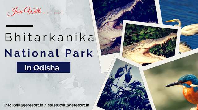 Bhitarkanika National Park in Odisha