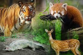 वन्य जीवन