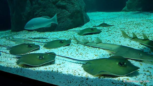 Aquario do Rio de Janeiro