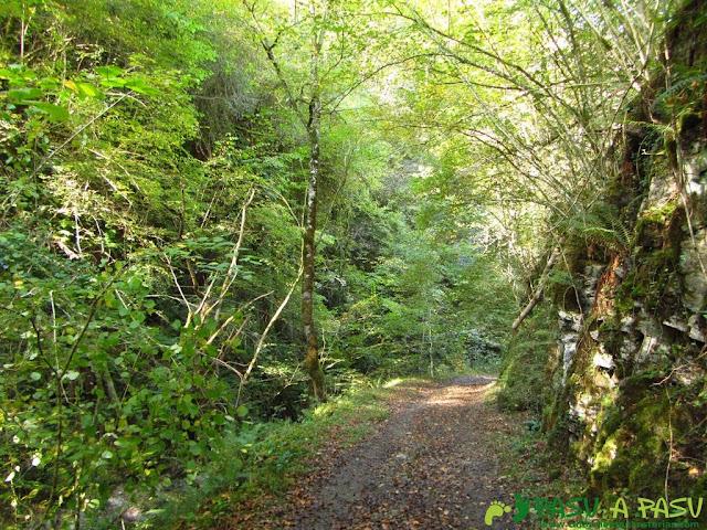 Rio Mampodre atravesando el bosque de Cea
