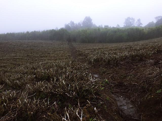 Solo Trip : Catatan Pendakian Gunung Dempo dari Jakarta