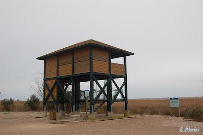 Observatori ubicat davant de la Casa de Fusta (4)
