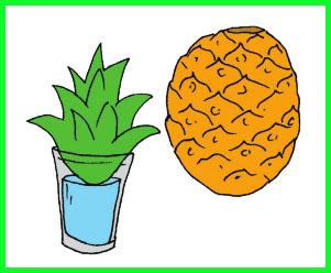 materi pelajaran kelas 6 sd contoh tumbuhan yang berkembang biak secara vegetatif