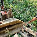 Pemuda Asal Desa Abang Tewas Tertimpa Pohon Yang Ditebangnya