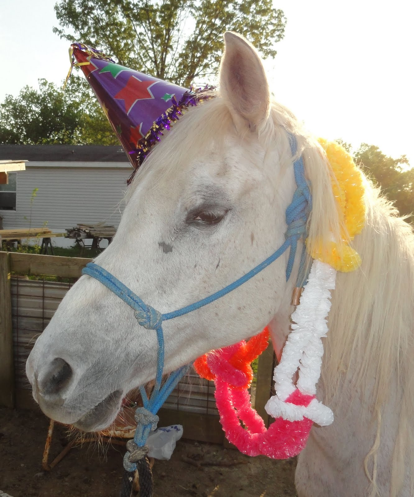 Batman Has A Birthday