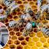 Morgan Freeman Transforms His Ranch Into A Honeybee Sanctuary Inspiring Millions