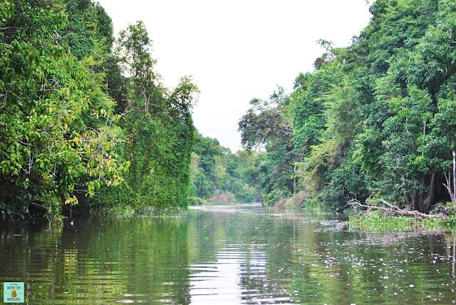 Río Kinabatangan en Borneo, Malasia