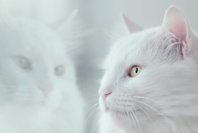 Information about cats