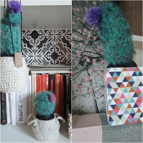 moherowy kaktus, dekoracyjny hit