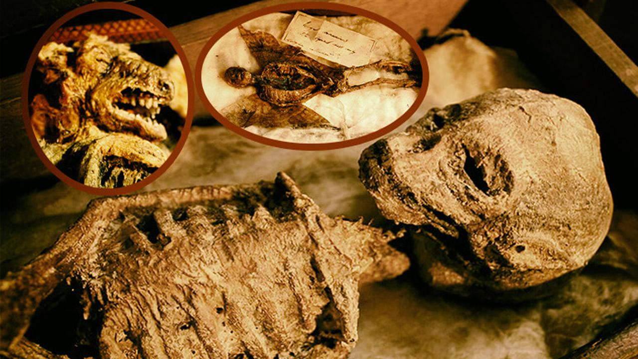 Cuerpos de extrañas criaturas míticas encontrados en sótano de una mansión del Reino Unido