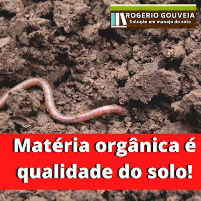 foto-materia-organica-e-qualidade-do-solo