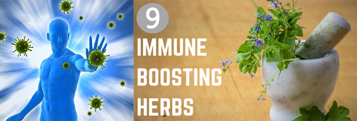 herbs that boost immunity
