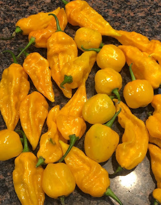bright yellow textured peppers