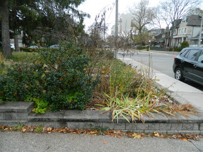 Bedford Park Toronto Fall Cleanup Before by Paul Jung Gardening Services Inc.--a Toronto Gardening Company
