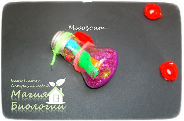 магия-биологии-музей-простейших-малярийный-плазмодий