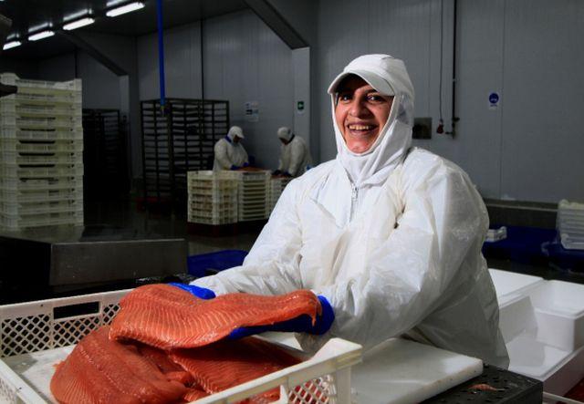 Industria salmonera