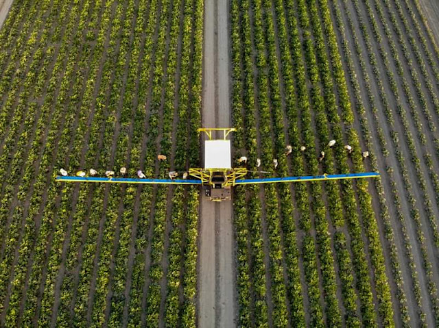 """Alt: = """"photo showing robot harvester harvesting crops in the field and crop pickers that are picking them"""""""