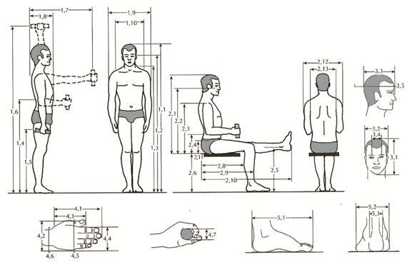 Criminologia y criminalistica la antropometria for Las dimensiones humanas en los espacios interiores pdf