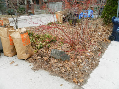 Runnymede Front Yard Toronto Spring Cleanup Before by Paul Jung Gardening Services--a Toronto Organic Gardening Company