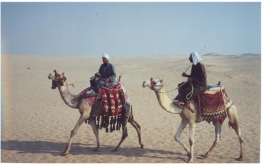 Image result for καμηλιερηδες σε ερημο