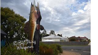 The BIG Trout by Bruno Barcodi   BIG Things Tasmania