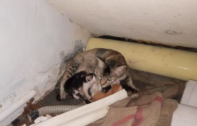 kucing-kesayangan
