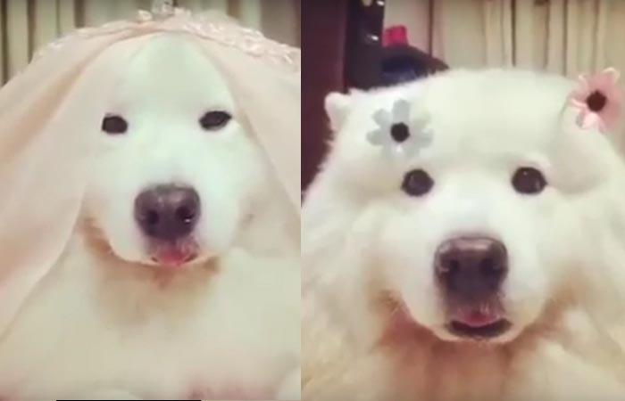 nên nuôi giống chó nào đẹp