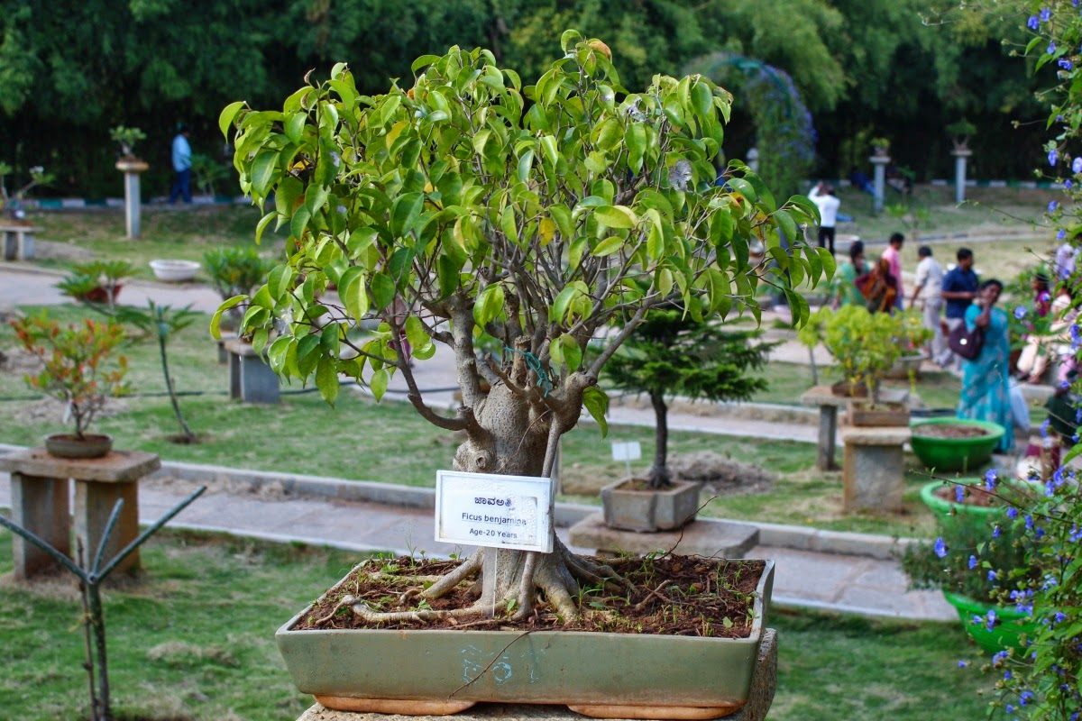 Journeys Across Karnataka Bonsai Garden At Lalbagh