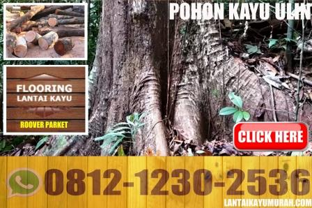 pohon kayu ulin, kayu bulian, kayu besi, ulin tando, ulin ilin, ulin tembaga, ulin kapur, parket kayu ulin