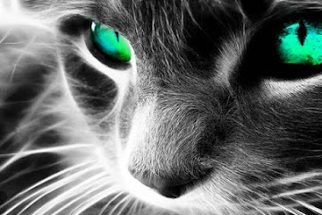 Как кошки защищают вас и ваш дом от духов и негатива!