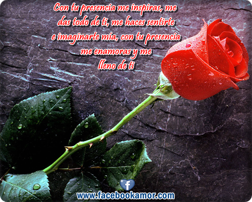 Rosas Rojas Con Frases De Amor: Imagenes De Rrosas Rrojas Con Frases