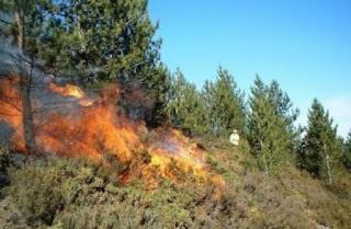حريق بمنطقة قرعة الطويبية قريبا من الطريق السيارة بنزرت/تونس