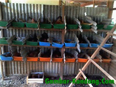 Tempat Bertelur Ayam Kampung bahan keranjang