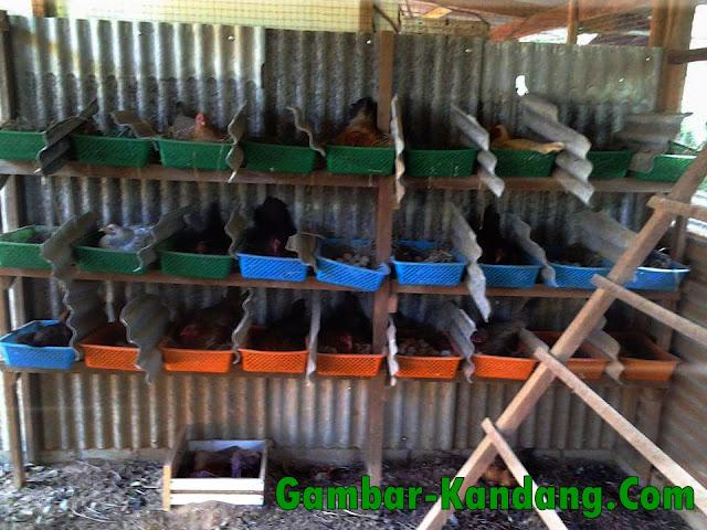 Kreasi Tempat Bertelur Ayam Kampung
