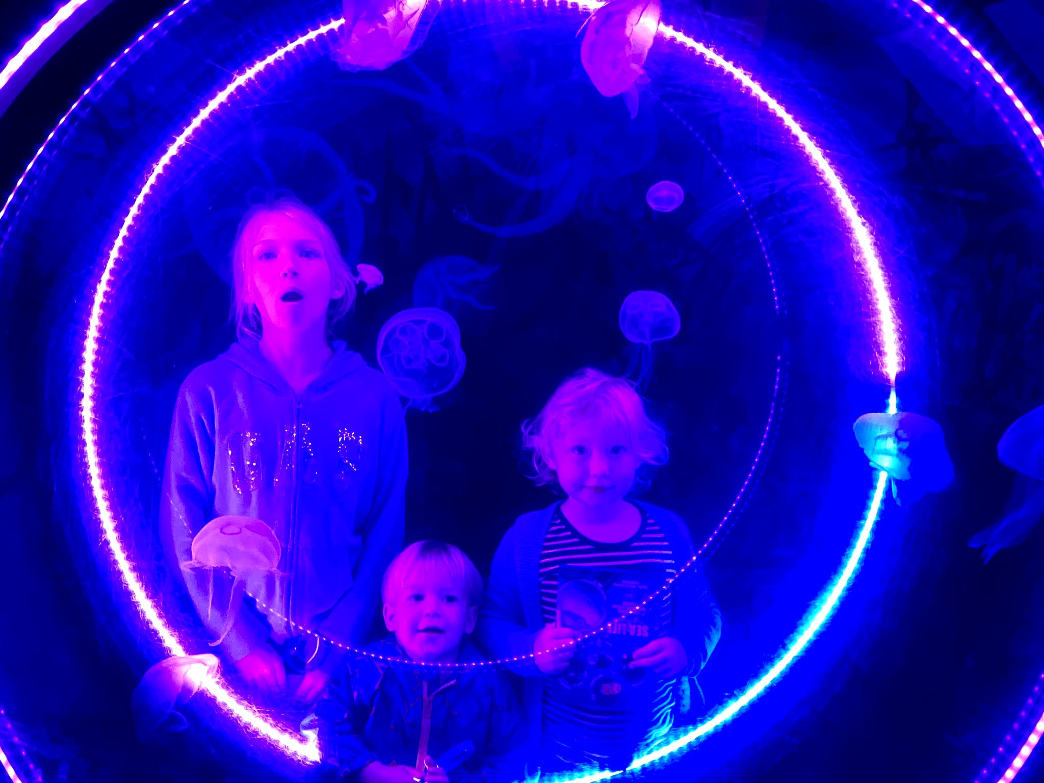 3 children watching a tank of small jelly fish at the sea life centre in great yarmouth