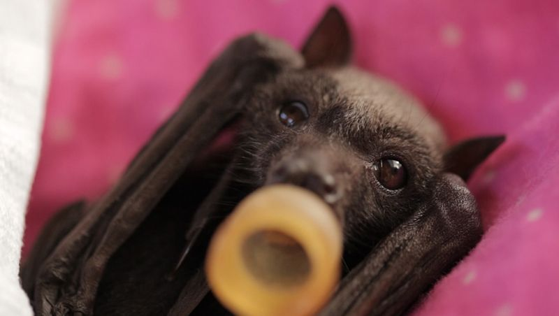 Baby Animals: Bat - Pup 17