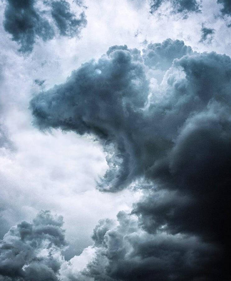 04-A-bear-storm-Umut-Recber-www-designstack-co