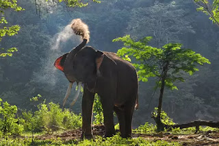 elephant-killed-two-villegers