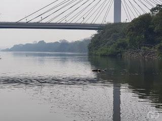 Corpo é encontrado boiando no rio Cuiabá próximo à ponte