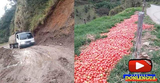 Productores de Mérida botaron sus cosechas porque no tienen vialidad para transportarlas