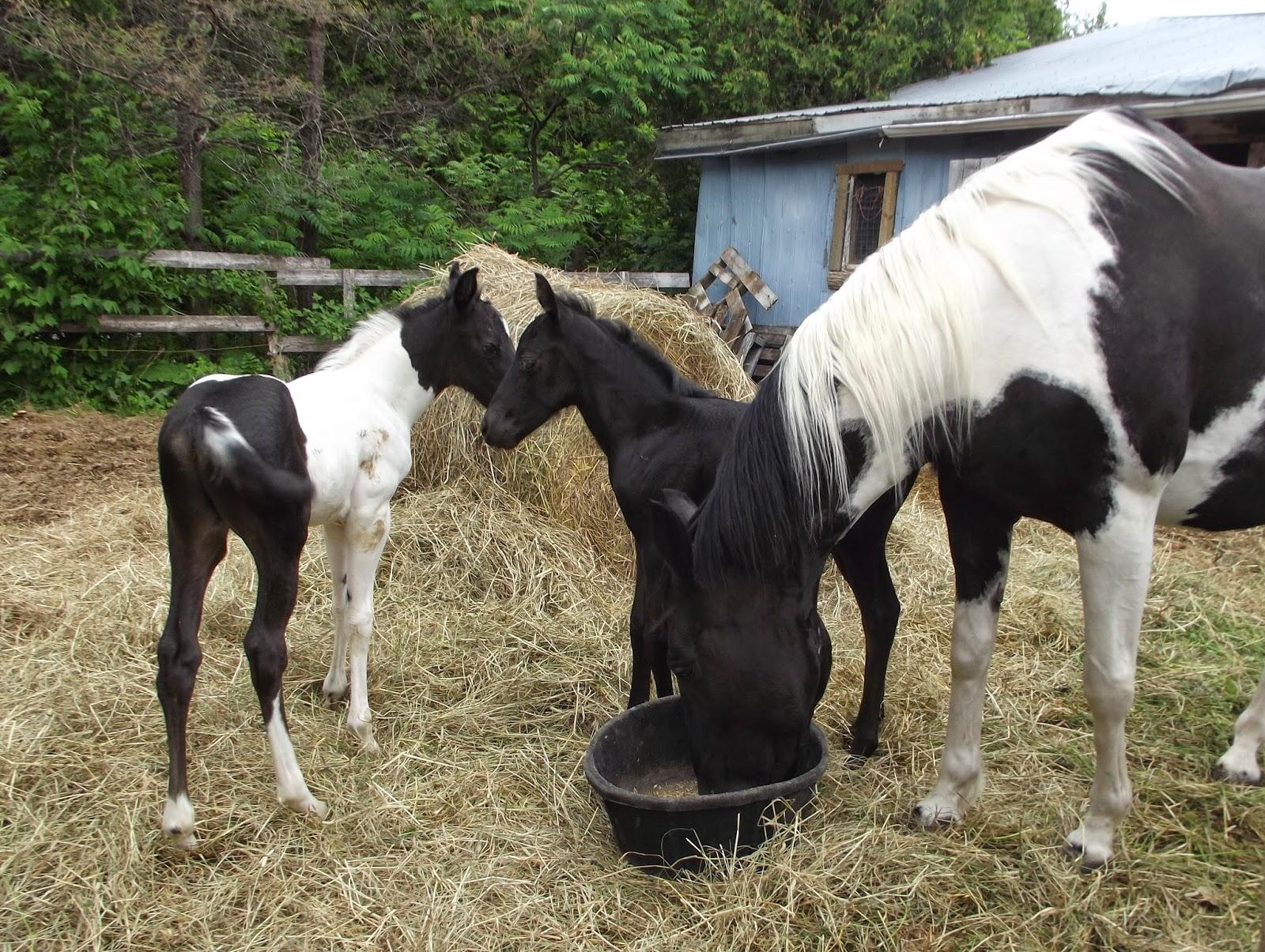foals - photo #46
