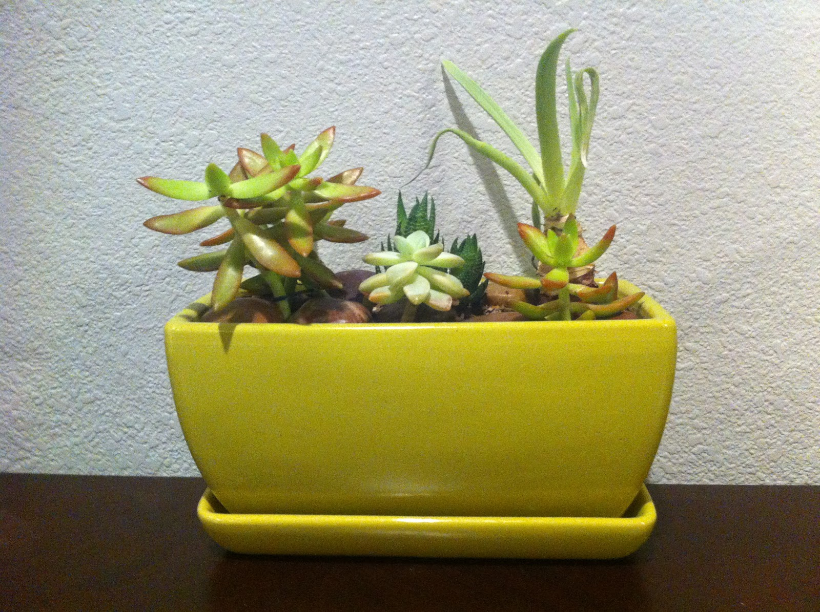 Small Succulent Plants For Sale Me My Food And My Creativity Diy Terrariums And Potted