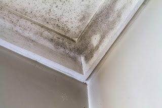 Image of mold on a ceiling