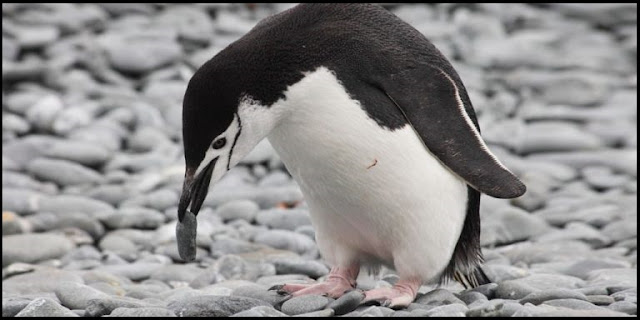 penguin information in english