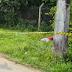 PACIENTE DE COVID-19 MORRE NO MATO AO LADO DO DELPHINA AZIZ EM MANAUS