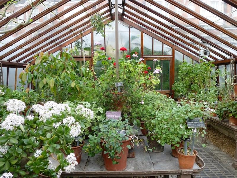 invernadero de cristal y plantas en maceta