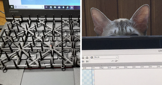Japanese Man Came Up With Anti-Cat Keyboard Protection And Tested On His Cat