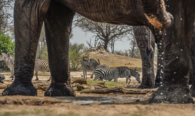 Elephants and zebra at a waterhole in Hwange National Park