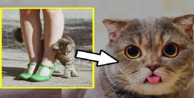 Pesan yang dibawa kucing waktu mendekati kita